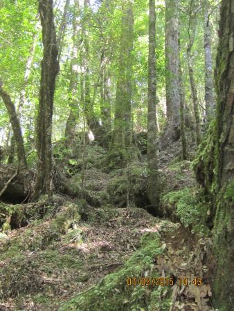 Tarkine Trails - Tarkine Rainforest Retreat: Train Forest Floor