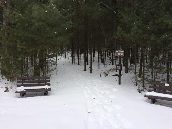 Camp Douglas, WI: Winter in Mill Bluff State Park.