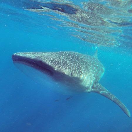Dolfijnen & walvissen spotten