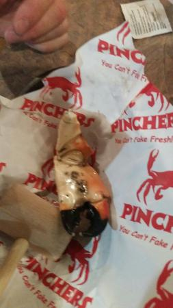 Pinchers: Sand crab claw. (large)