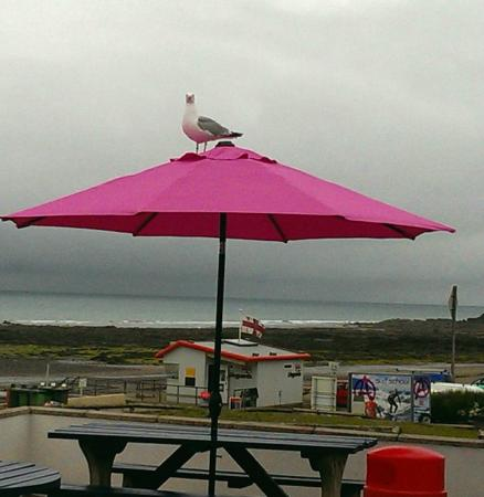 Widemouth Bay Cafe