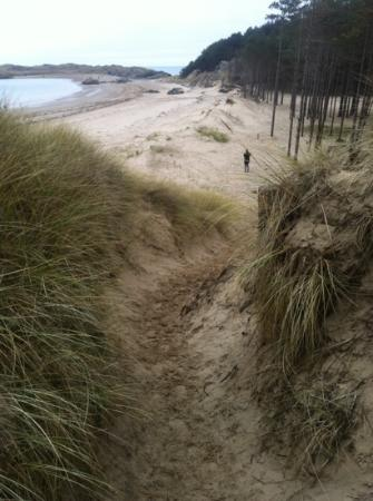 Newborough Sand Dunes