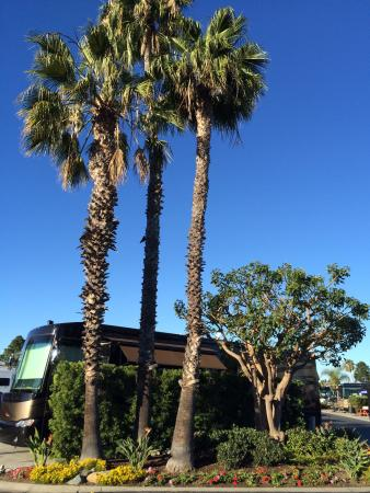 Chula Vista RV Resort: Another day in paradise