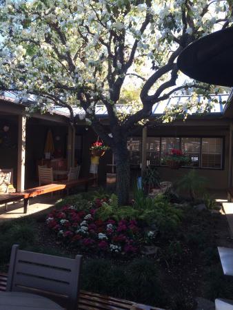Chula Vista RV Resort: Courtyard