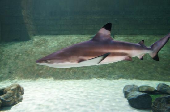 Sharjah Aquarium: Обитатели аквариума