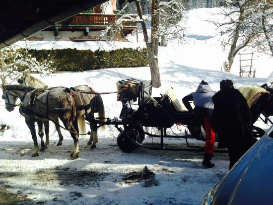 Tennerhof Gourmet & Spa de Charme Hotel: You can get a sleigh ride tour