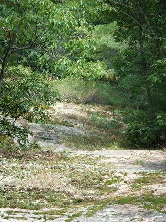 Marrick's Landing Cottage Resort : More trail - I love it here!