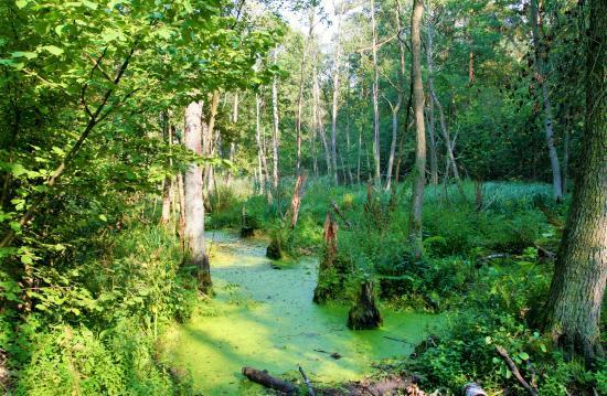 Kampinos National Park : http://polandjustnow.com/sierakow-nature-reserve-izabelin.html