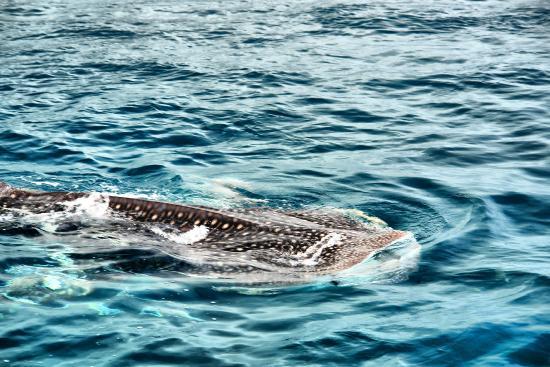 Curieuse Island: Встретилис с акулой