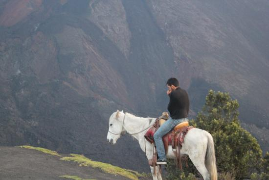Pacaya Volcano: The horses that join in case you need help on the hike.