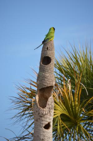 Arvilla Resort Motel Treasure Island: There were resident Parakeets and this is their home