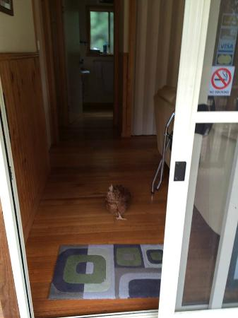 Drumreagh: Chicken as a roomie