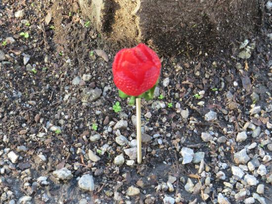 Fairhaven Historic District: Strawberry on a stick on Valentine's day!