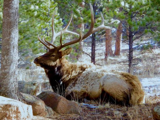 Romantic RiverSong Bed and Breakfast Inn : Beautiful bull elk posing for guests