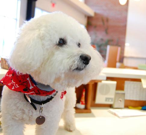Hotel Indigo Columbus Downtown : MIles the dog is the ultimate friend front-desk attendant.