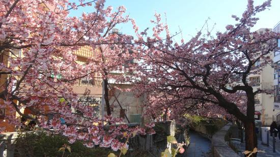 Itokawa Path : 糸川にかかるあたみ桜