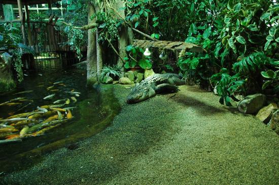 Crocodile?s siesta - Picture of Tropicarium, Budapest - TripAdvisor