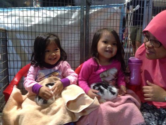 Scitech: Petting baby rabbits