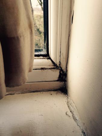 The Greyhound Hotel: Window