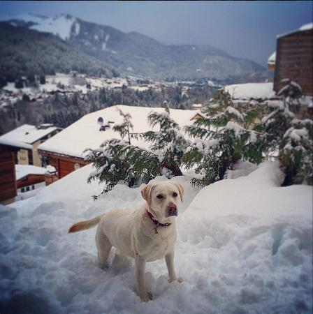 Star Ski Chalets: Our daily morning visitor