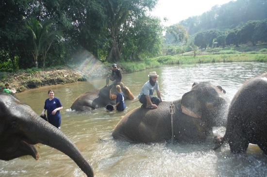 Magical Elephant Training: splash