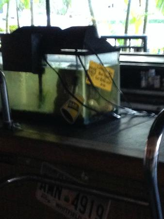 Ft. Lauderdale Beach Resort Hotel & Suites : Tank on the bar where people can possibly spill drinks in tank.