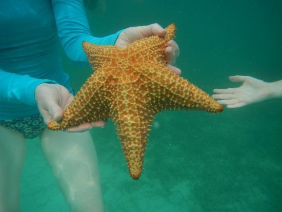 Paradise Scuba and Snorkeling Center: Large Starfish