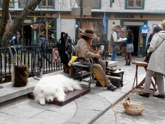 Old Quebec: Local Busker and his lovely dog