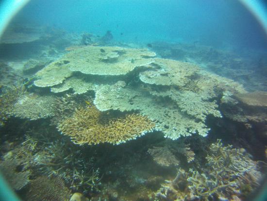 Diving picture of manta dive gili air resort gili air - Manta dive gili air ...