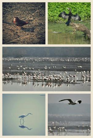 Sewri Jetty: Sewri and bhandup