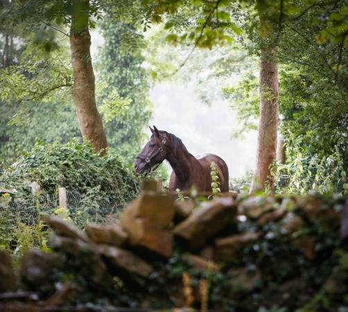 Quin, Ирландия: Stunning horses and grounds