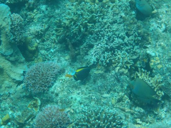 Bohol Divers Resort: Diving with Bohol Divers near Balicasag Island