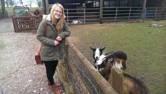 Yew Tree Farm: friendly goats