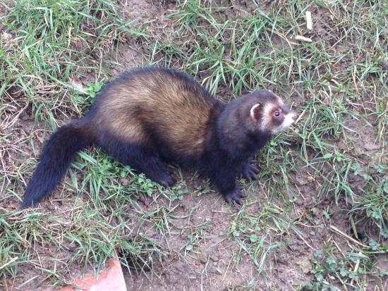 Lingfield United Kingdom  City new picture : badger Picture of British Wildlife Centre, Lingfield TripAdvisor