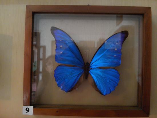 Museo de Bichos E Insectos