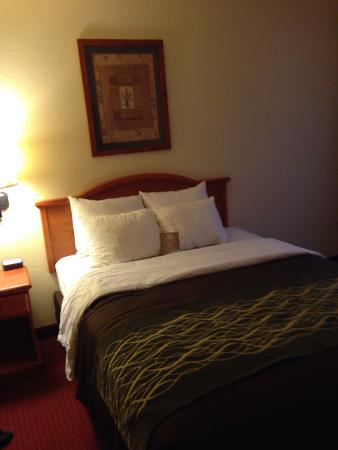Comfort Inn Manitou Springs: Queen bed standard