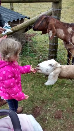 Fairytale Farm: feeding the friendly goats