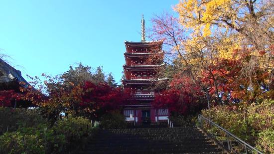 Hondo-ji Temple : 「紅葉」の頃