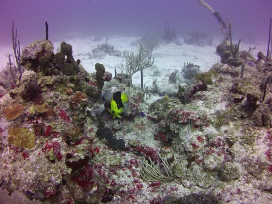 "West End Village, Anguila: Beautiful underwater ""gardens"" of coral"