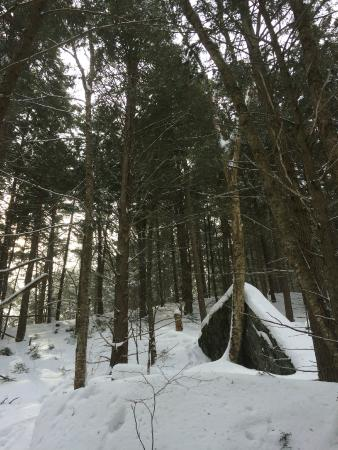 Featherbed Inn: Photo from our snow shoeing in the back of their property