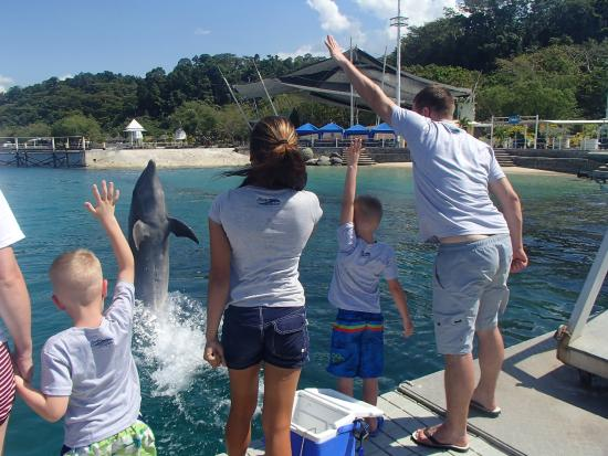 Ocean Adventure : Training s dolphin