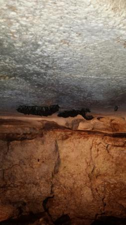 Alabaster Caverns State Park: Bats are everywhere.