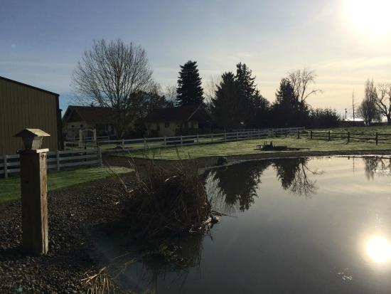 Hopewell Bed & Breakfast: The pond, early morning