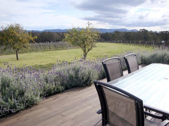 Adina Vineyard & Olive Grove: From your Deck