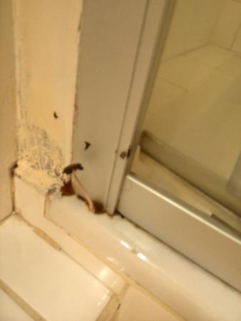 champignon a cot de la cabine de douche photo de le juliette dodu saint denis tripadvisor. Black Bedroom Furniture Sets. Home Design Ideas