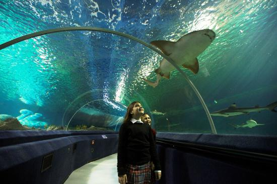There is plenty for everyone at SEA LIFE Aquarium ...