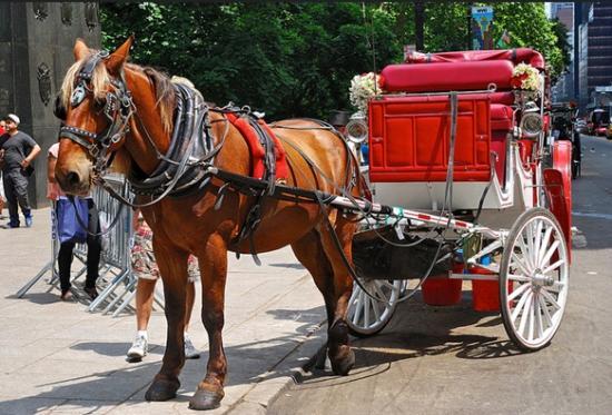 Central Park Horse Tours