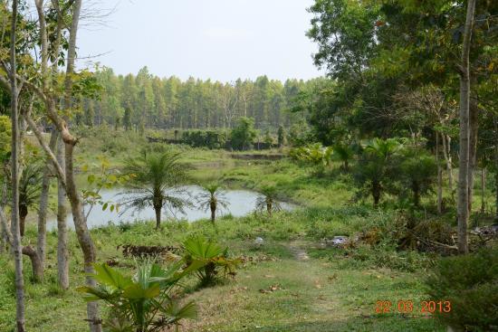 Green Lagoon Hotel & Resort: Near by ground areas