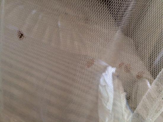 Brinkhouse Guest House: The blood stained mosquito net in our room