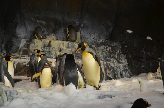 SeaWorld Orlando : em seu habitat